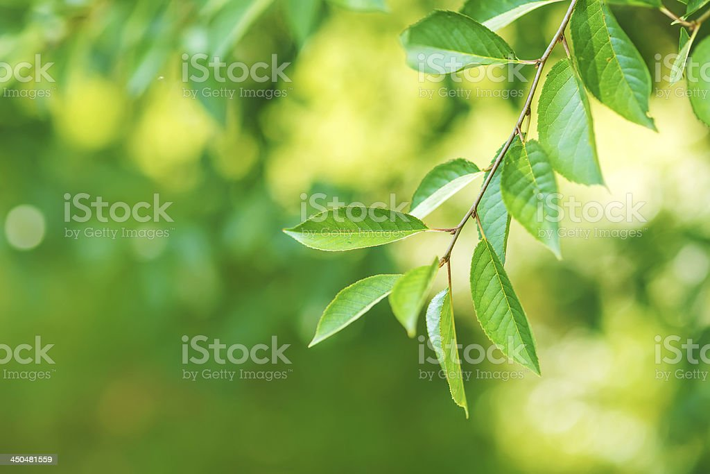 Close-up of fresh green leafs royalty-free stock photo