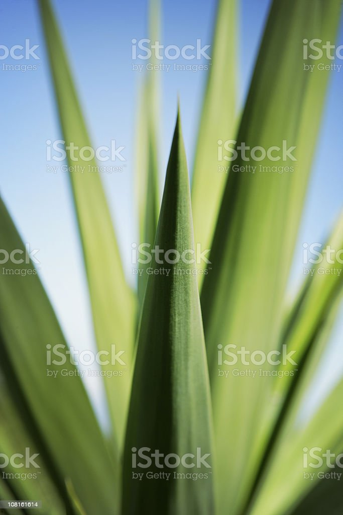 Close-up of Fresh Green Plant Leaves royalty-free stock photo