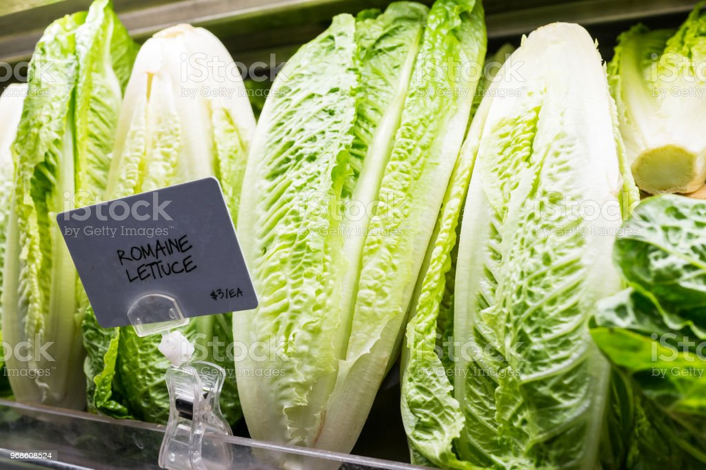 Closeup of fresh raw, expensive green romaine lettuce heads in supermarket grocery market store display with sign, price per each stock photo