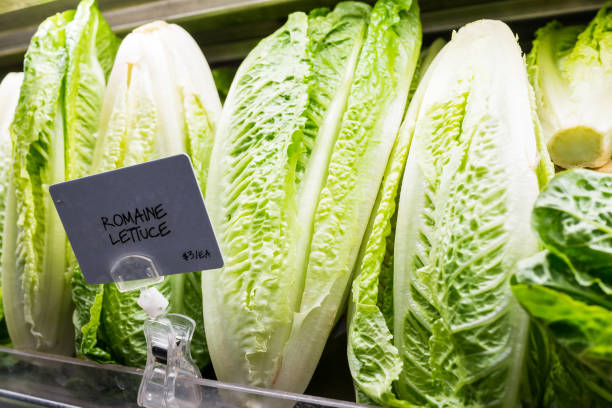 Closeup of fresh raw, expensive green romaine lettuce heads in supermarket grocery market store display with sign, price per each Closeup of fresh raw, expensive green romaine lettuce heads in supermarket grocery market store display with sign, price per each romaine lettuce stock pictures, royalty-free photos & images