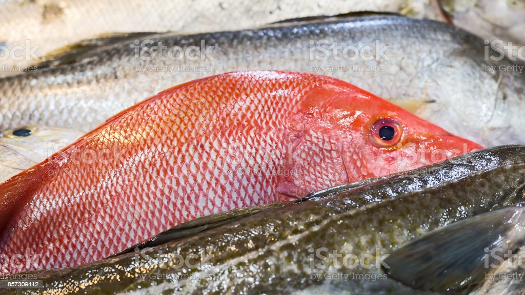 Close-up of fresh Red Snapper fish. stock photo