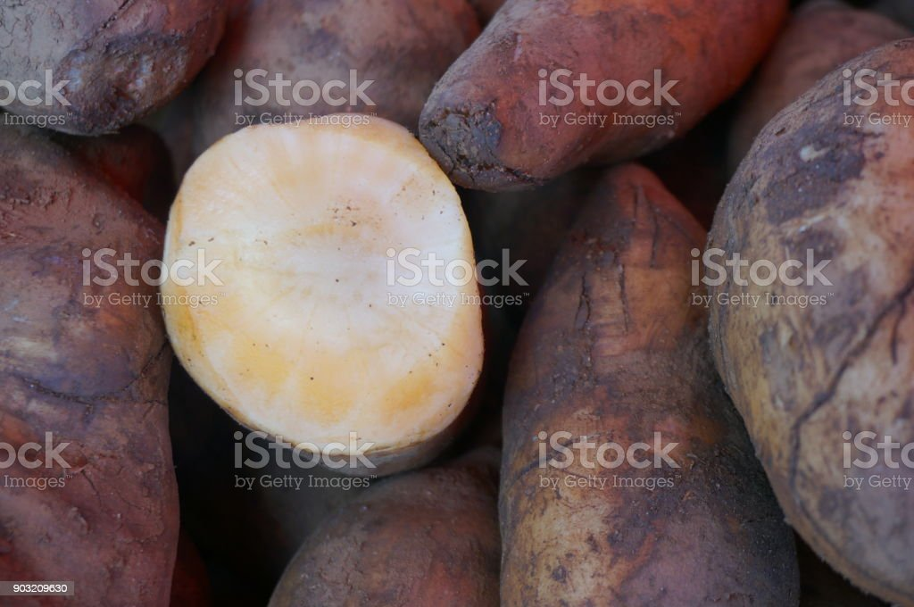 Closeup of fresh root of Yacon stock photo