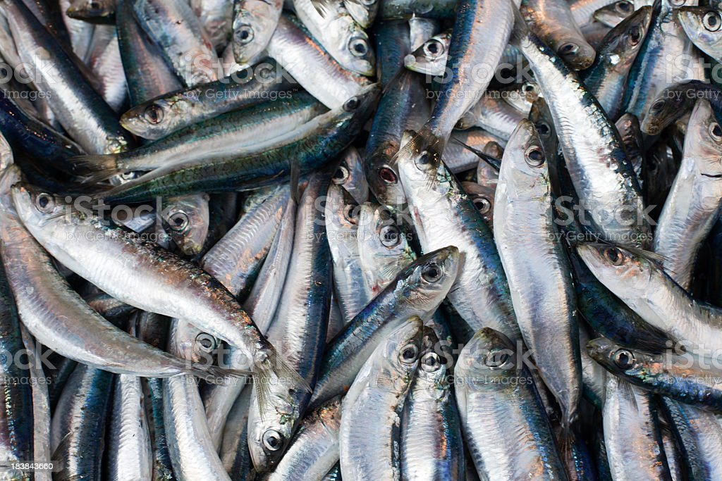 Close-up of fresh sardines grouped together stock photo