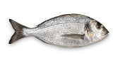 istock Close-up of fresh Sea Bream against white background 165637260
