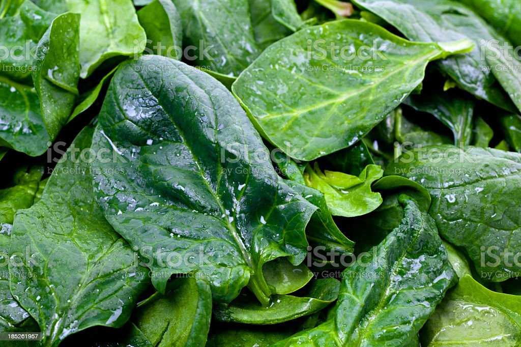 Closeup of fresh wet green spinach leaves stock photo