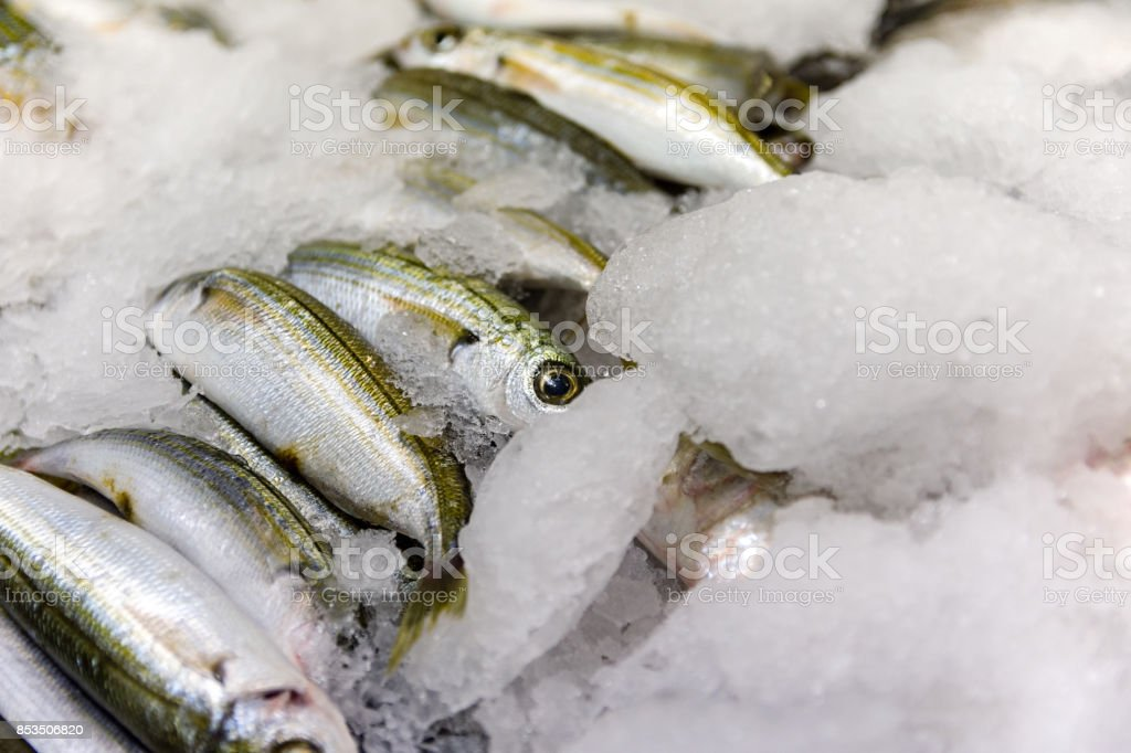 Close-Up Of Freshly Caught Bogue Fish Or Boops Boops For Sale In The Greek Fish Market stock photo