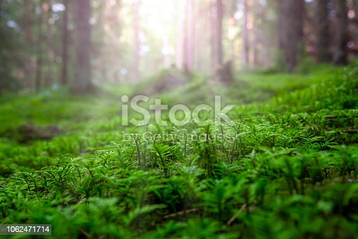 Close-up of freshness green moss against the background of sunshine in the forest