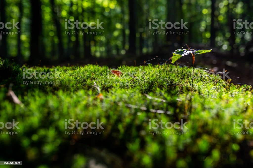 Close-up of freshness green moss and growing leaf, selective focus stock photo