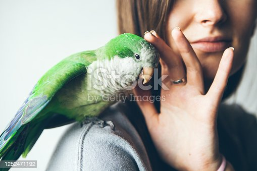 istock Close-up of friendly and cute Monk Parakeet. Green Quaker parrot is sitting on a woman's shoulder. 1252471192