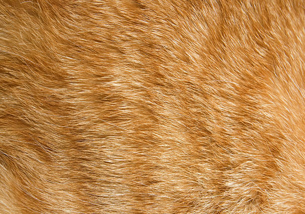 Close-up of fur on an orange cat Close-up of ginger cat fur for texture or background animal hair stock pictures, royalty-free photos & images