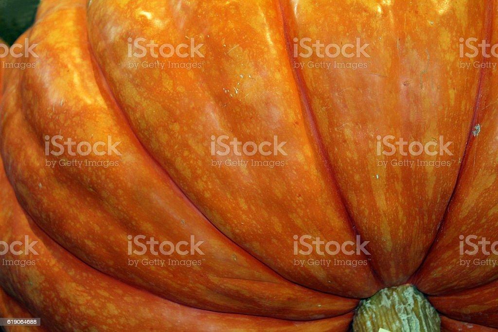 Closeup of  Giant Orange Pumpkin at the Fair stock photo
