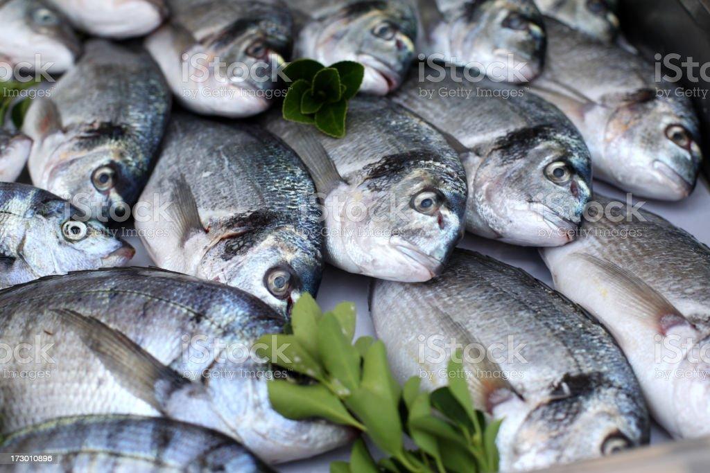 Close-up of gilt-head bream inside a fish market royalty-free stock photo