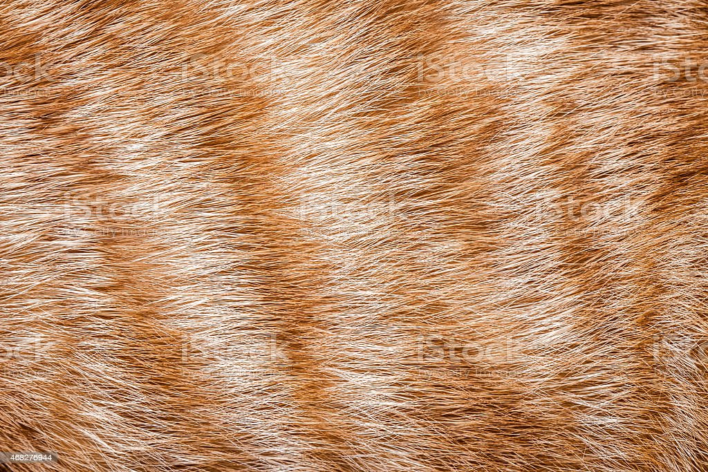 Close-up of ginger cat fur stock photo