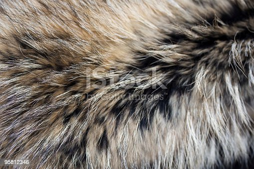 raccoon fur texture