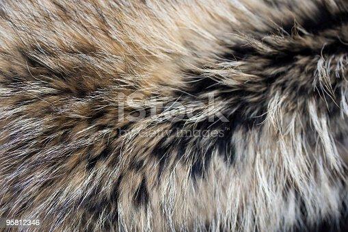 istock Close-up of gray black brown luxury animal fur 95812346