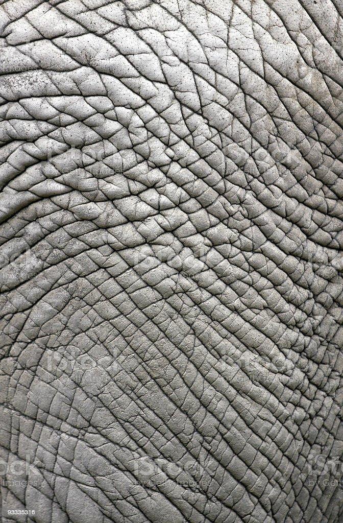 elephant Haut-backround/Muster – Foto