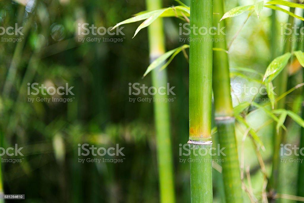 Acercamiento de bambú verde de los árboles - foto de stock