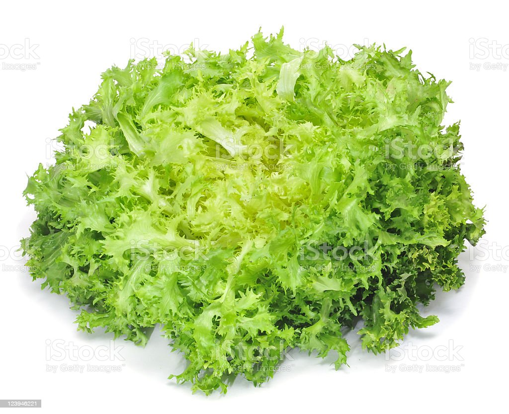 Closeup of green escarole endive with white background stock photo