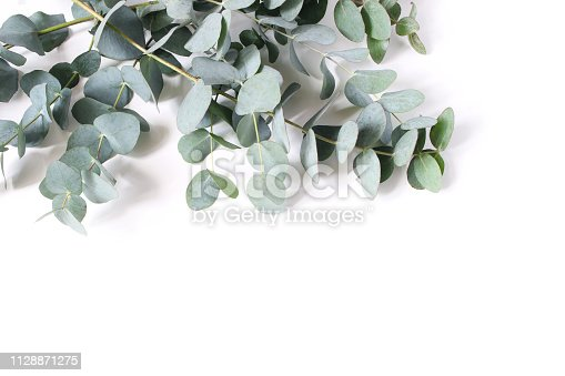 istock Closeup of green eucalyptus leaves and branches isolated on white table background. Modern floral composition, botanical frame, banner. Feminine styled stock image. Flat lay, top view. 1128871275