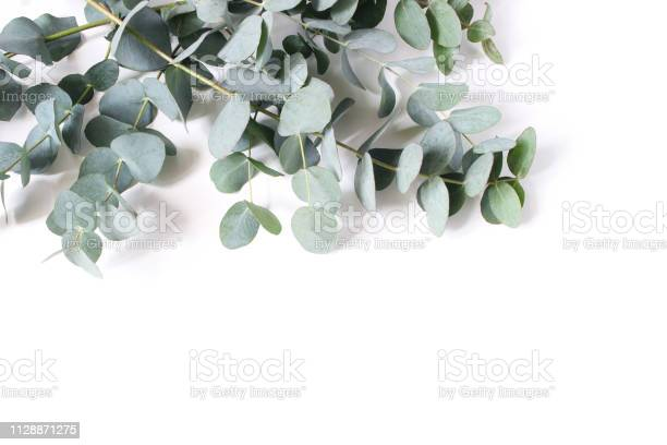 Closeup of green eucalyptus leaves and branches isolated on white picture id1128871275?b=1&k=6&m=1128871275&s=612x612&h=hpfhzufsgmij3m5gou umb6lu4xvpljjpgwp6ujxnom=