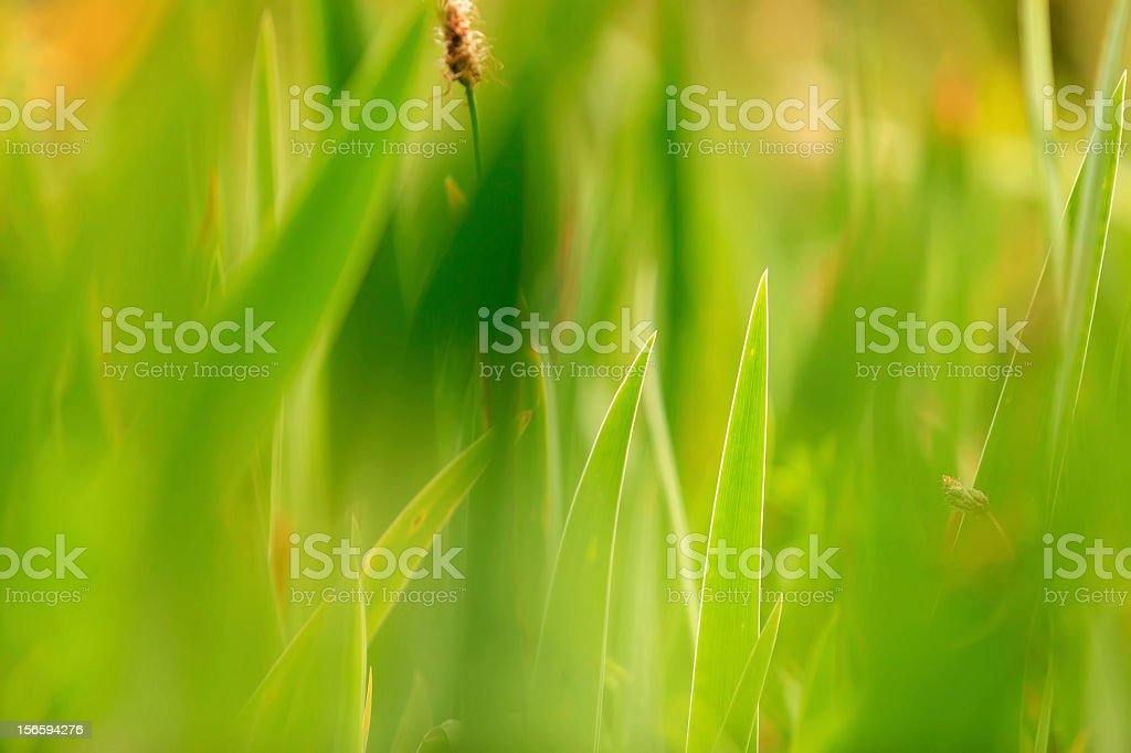 Close-up of Green Grass Blades royalty-free stock photo