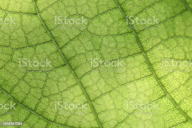 Photo of Closeup of green leaf