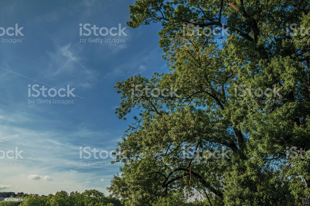 Close-up of green leafy treetop contrasting with sunny blue sky at Laeken Park in Brussels. stock photo