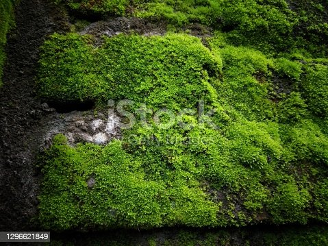 istock Closeup of green moss on wall 1296621849