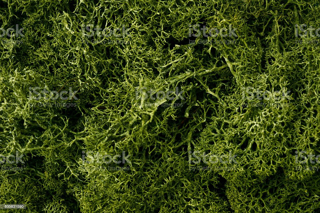 Close-up of green moss texture background stock photo