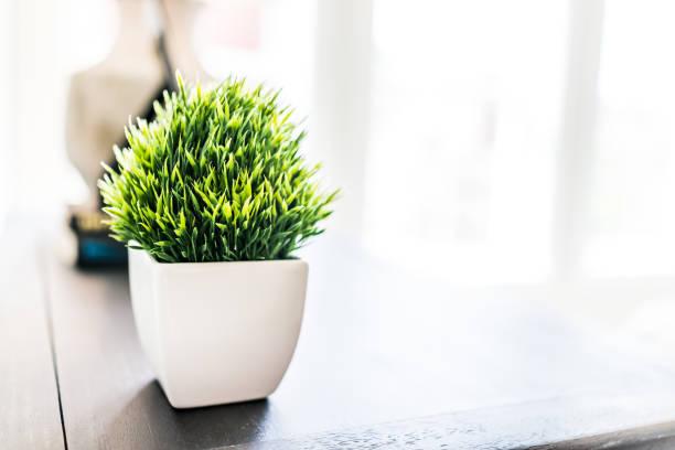 nahaufnahme der grünpflanze in kleinen weißen keramik blumentopf auf tisch in minimalistischen inszeniert modell haus innen mit hellem licht vom fenster - keramik vase stock-fotos und bilder