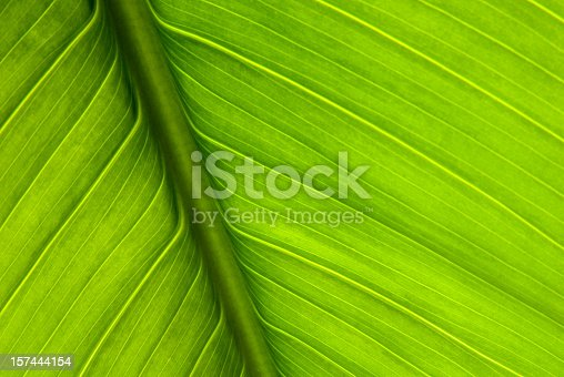 Macro picture of a plant leaf.