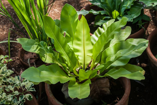 Closeup of green plant with large leaves stock photo