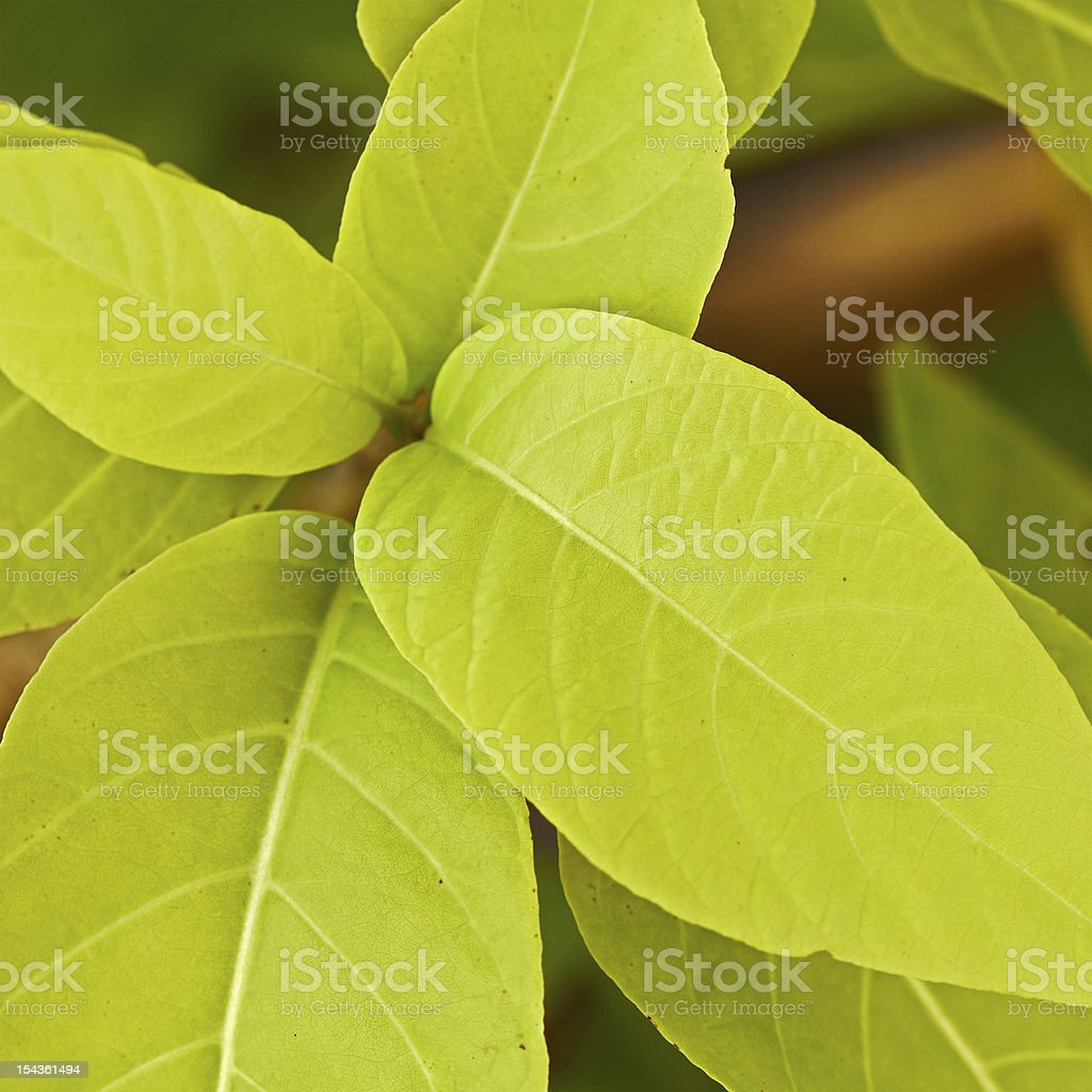 Closeup of green tropical leaves stock photo