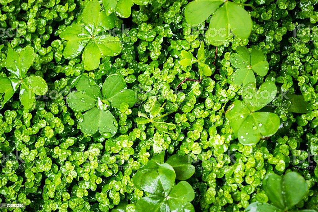 Closeup of Green Vegetation stock photo