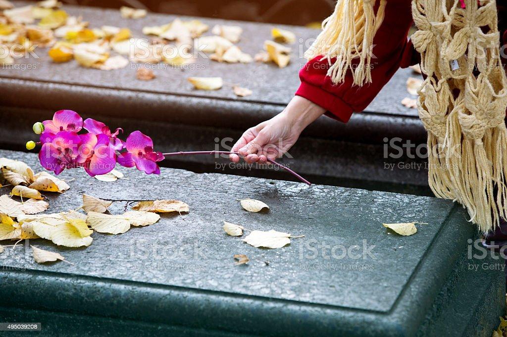 Nahaufnahme der hand putting-Blume auf Bahre – Foto