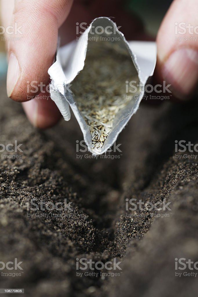 Close-up of Hand Sowing Seeds from Packet into Compost stock photo