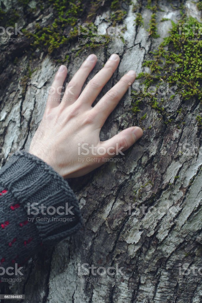closeup of hand touching a tree royalty-free stock photo