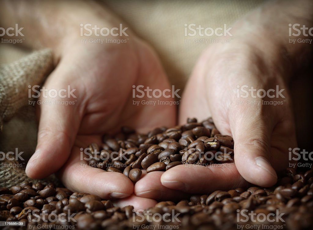 Close-up of hands holding coffee beans in a sack royalty-free stock photo