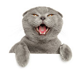 istock Close-up of happy cat above banner 1251409982
