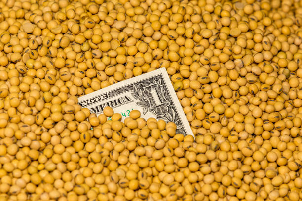 Closeup of harvested soybean seeds covering one dollar bill. Concept of commodity market prices during tariffs and trade war stock photo