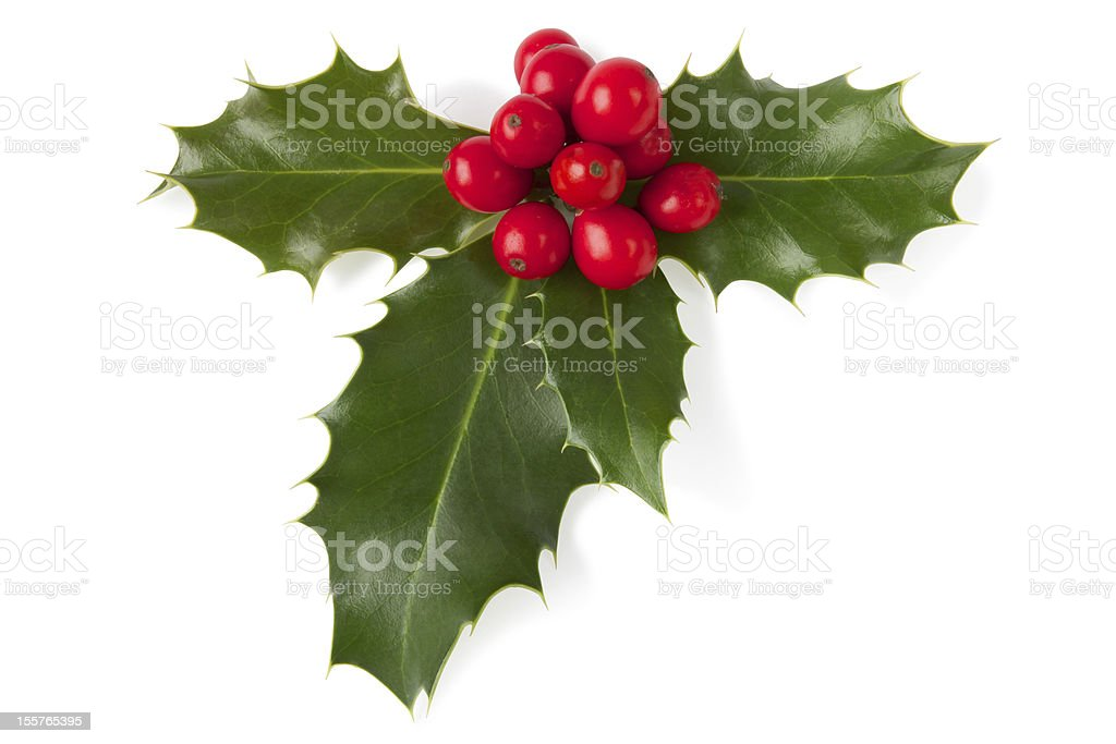 A close-up of holly leaves with berries stock photo