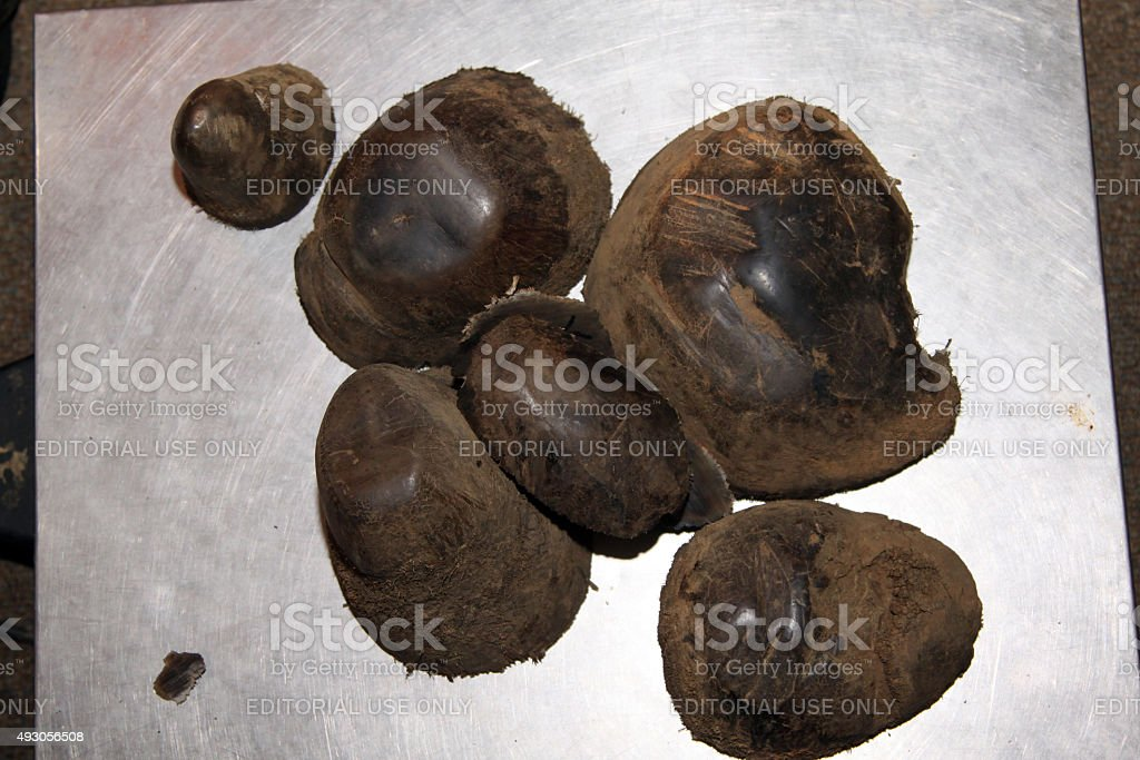 Close-up of horn tips removed stock photo