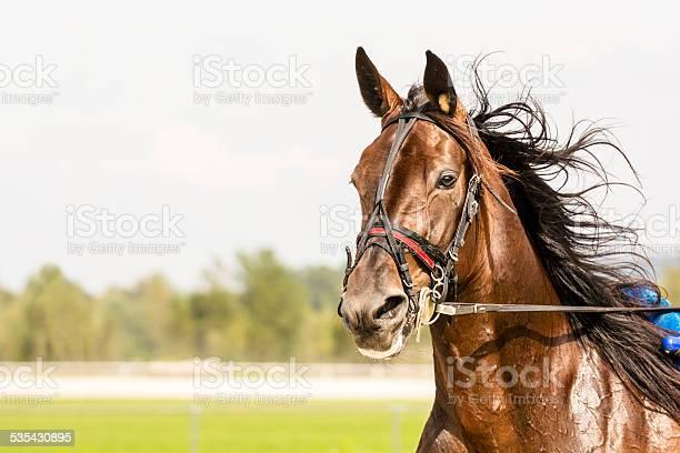 Closeup of horse on harness racing picture id535430895?b=1&k=6&m=535430895&s=612x612&h=6mm4f9nylzjrq3f7snmatf4jzhgpuilnih95hkm51zk=