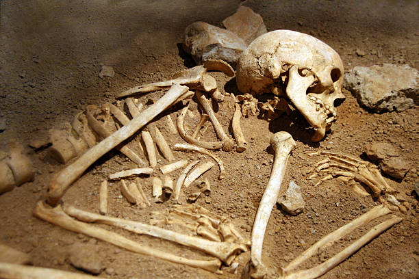 Close-up of human remains in soil human bones of someone curled in a grave archaeology stock pictures, royalty-free photos & images