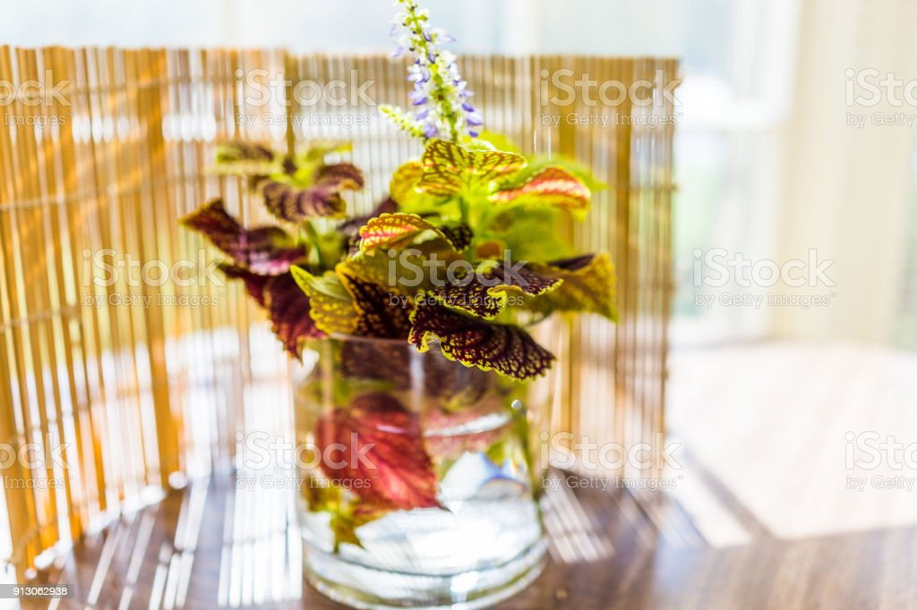 Closeup Of Ikebana Coleus Plant In Vase On Table With Golden
