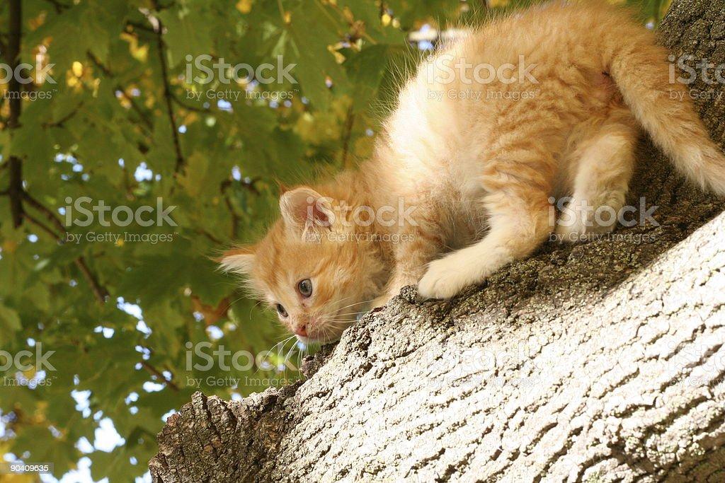 Close-up of kitten stuck on a tree stock photo