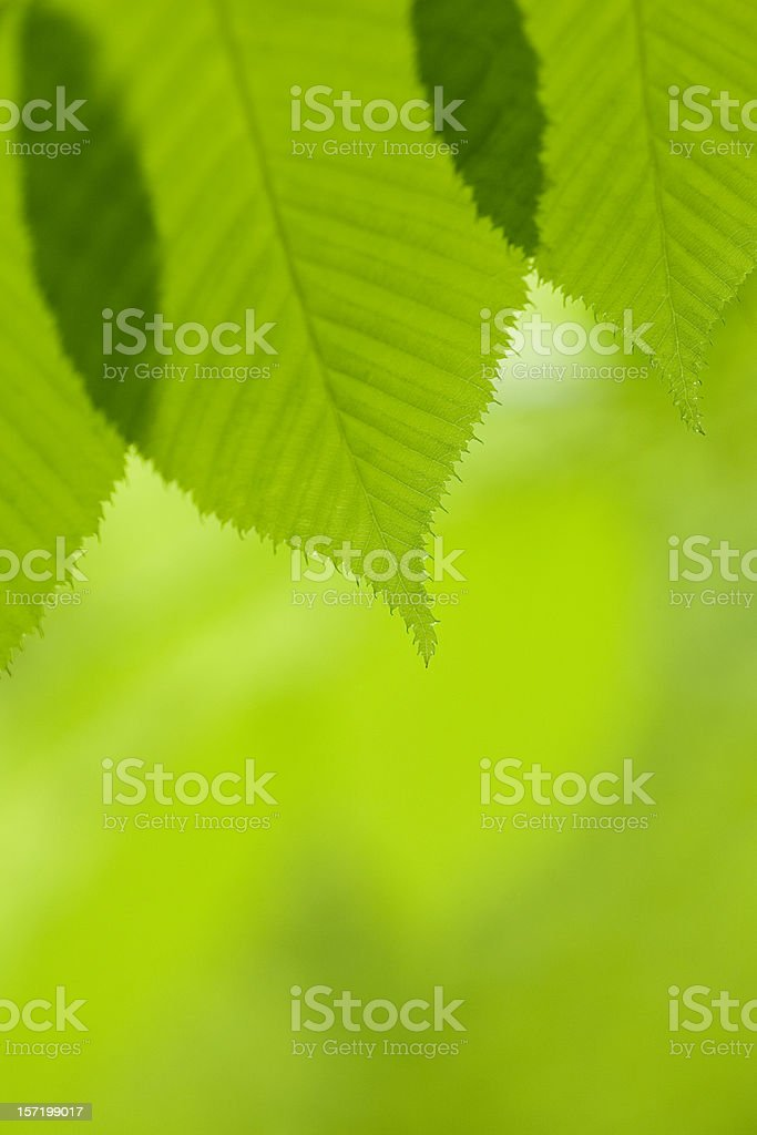 Close-up of Leaf royalty-free stock photo