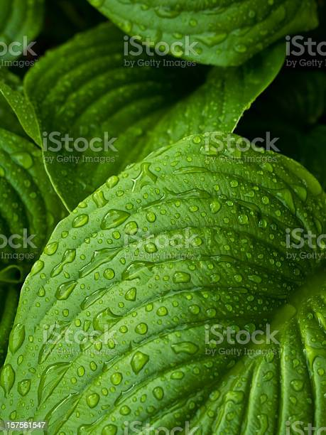 Photo of Close-up of leaves with dew drops
