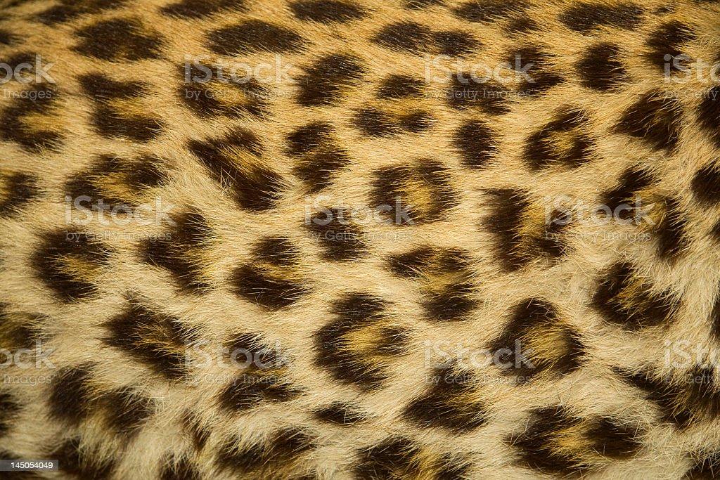 Cheetah Fur Close Up Closeup Of Leop...