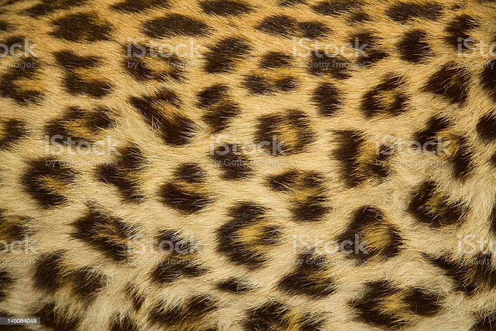 Close-up of leopard fur texture stock photo